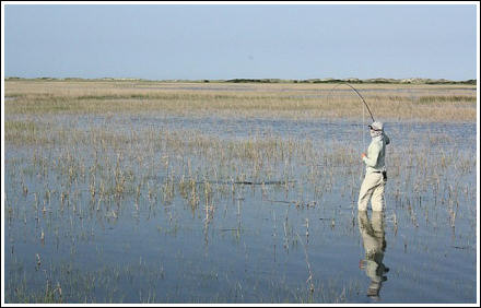 Wade-fishing in the Spartina Grass